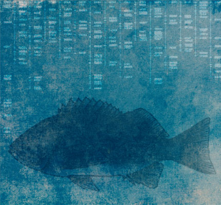 comparative_genomics_rockfish